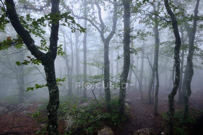 Vue des arbres de la forêt couverte dans la brume — Photo de stock