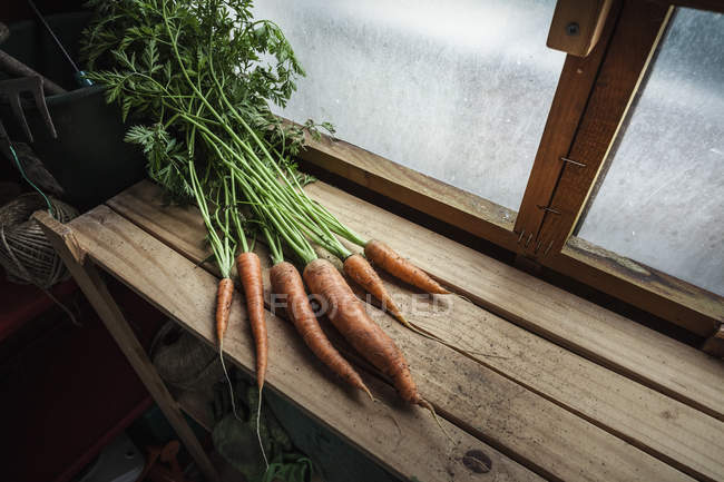 Mazzo di carote appena raccolte su legno — Foto stock