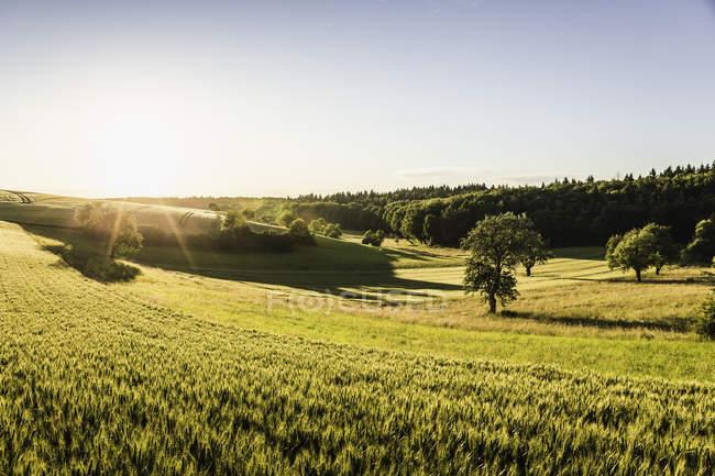 Cena rural ao nascer do sol, Neulingen, Baden-Wurttemberg, Alemanha — Fotografia de Stock