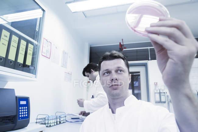 Cientista examinando amostra em placa de Petri — Fotografia de Stock