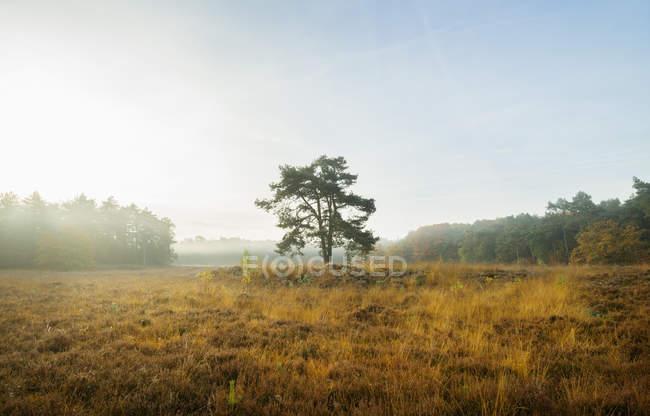 Campo com árvore entre madeiras em nevoeiro — Fotografia de Stock