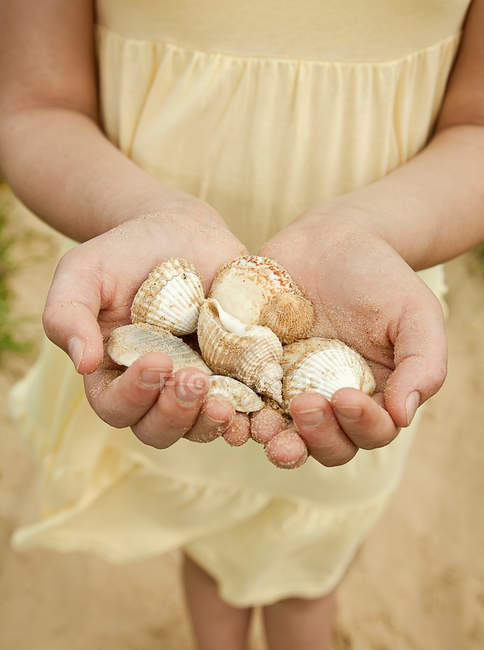 Girl holding seashells on beach, close-up partial view — Stock Photo