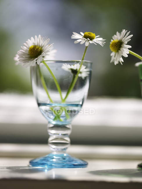 Wine glass with daisy flowers on windowsill — Stock Photo