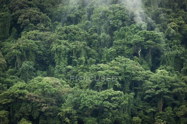 Jungle dense de réserve insulaire Nosy Mangabe — Photo de stock