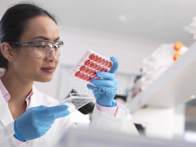 Scientifique examinant des cultures cellulaires dans un bac à puits multiples en laboratoire — Photo de stock