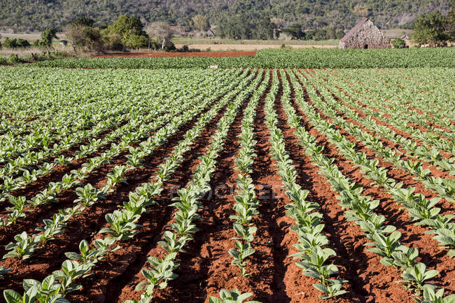 Vista del paisaje de campo y el edificio de la granja - foto de stock