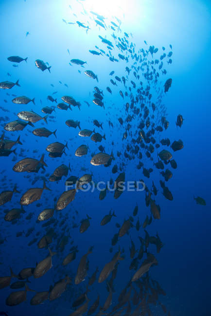 Large group of schooling fish under water — Stock Photo