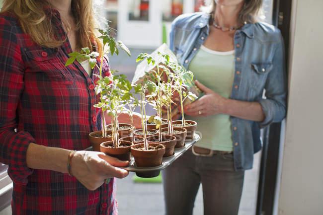 Recadrée vue de womens section en porte maintenant bac de plantes — Photo de stock