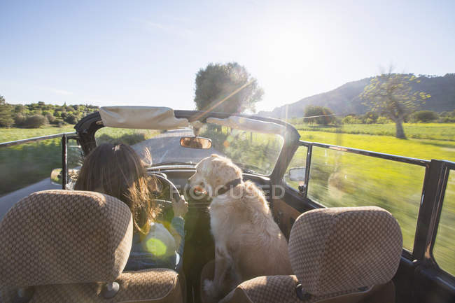Raer view of mature woman and dog in convertible car — Stock Photo