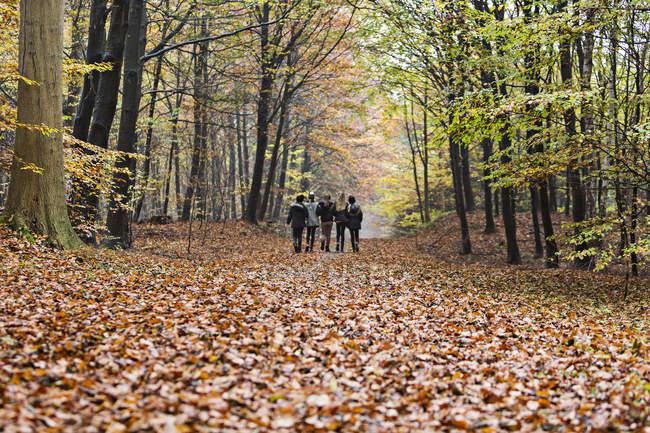 Вид сзади девочек, гуляющих в осеннем лесу — стоковое фото