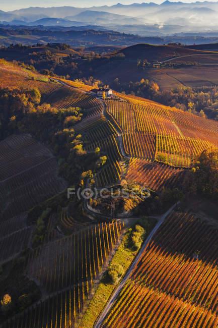 Vue aérienne du laminage des vignobles de paysage et de l'automne au soleil — Photo de stock