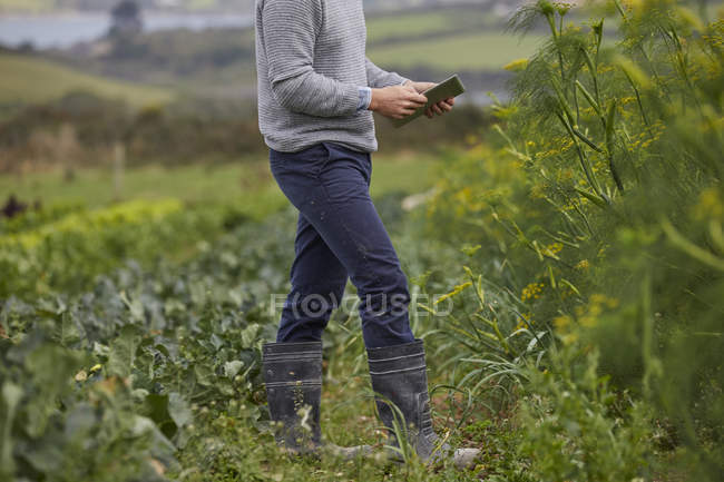 Recadrée la vision de l'homme sur les terres agricoles à l'aide de tablette numérique — Photo de stock