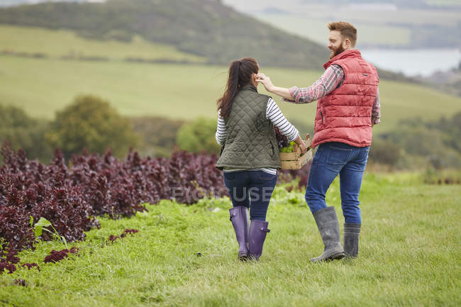 Rear view of couple on farm harvesting lettuce — Stock Photo