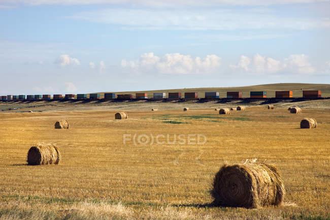 Balles de foin dans le champ — Photo de stock