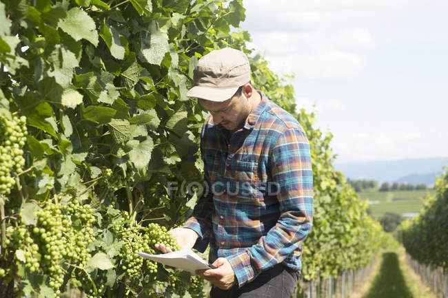 Farmer by plant crops looking at paperwork — Stock Photo