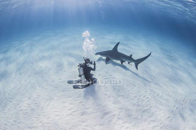 Plongeur prenant la photographie du grand requin de Hammerhead — Photo de stock
