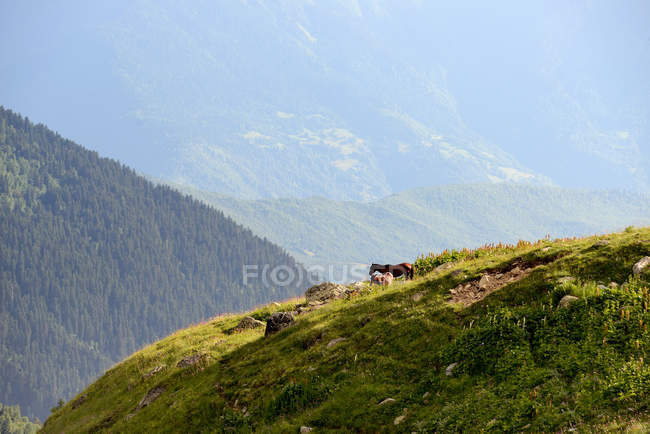 Rural landscape of Caucasus at daytime, Svaneti, Georgia — Stock Photo