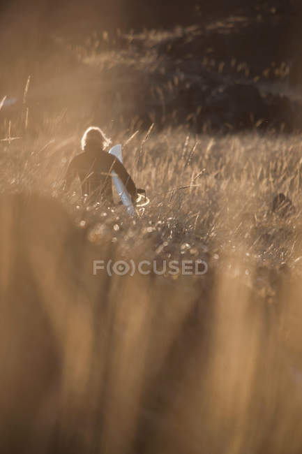 Rear view of surfer carrying board through wheat field — Stock Photo