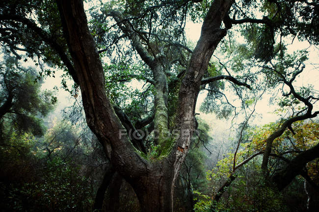 Musgoso árvore que cresce na floresta — Fotografia de Stock