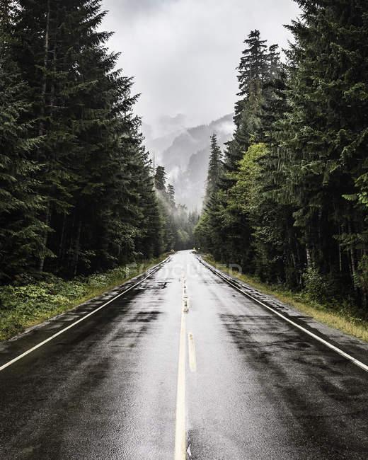 Autostrada bagnata che si estende attraverso boschi di pini — Foto stock