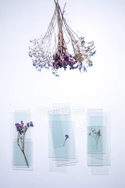 Vista dall'alto di piante essiccate e lastre di vetro su sfondo bianco — Foto stock