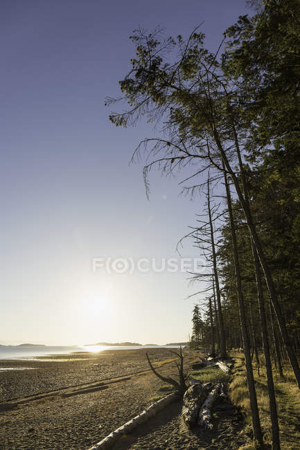Beach and forest at sunrise, Rathrevor Beach Provincial Park, Vancouver Island, British Columbia, Canada — Stock Photo