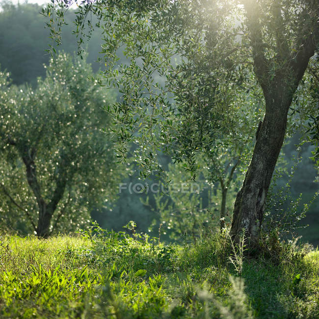 Scenic view of trees growing in meadow at sunlight — Stock Photo