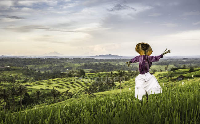 Elevated view of Jatiluwih rice terraces and scarecrow, Bali, Indonesia — Stock Photo