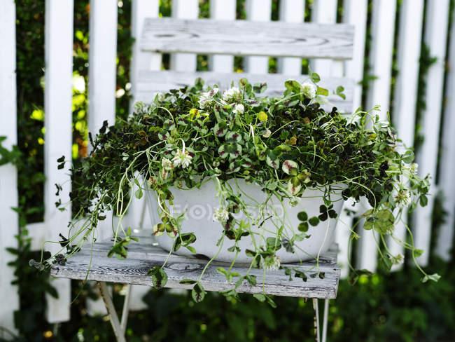 Садові рослини з зеленими листям в завод каструлю на складаний стілець — стокове фото