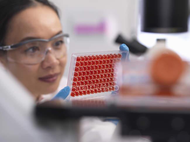 Scientifique préparant une micro-plaque avec des échantillons de sang pour les tests médicaux dans un laboratoire — Photo de stock