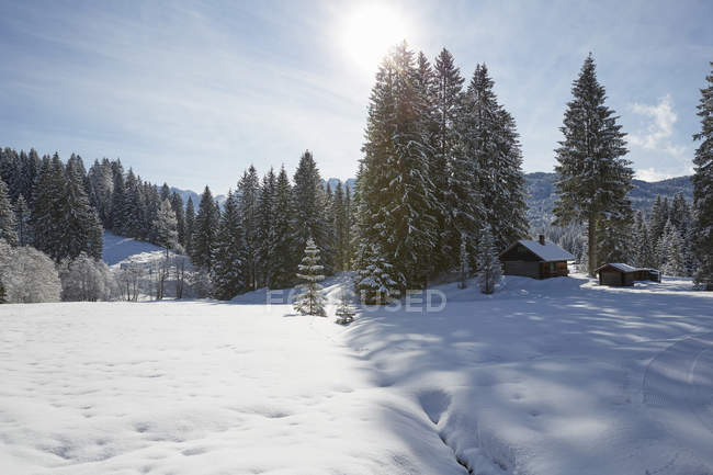 Fir trees and log cabin on snow covered landscape, Elmau, Bavaria, Germany — Stock Photo