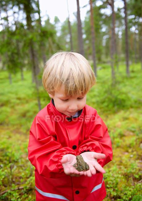 Тоддлер держит лягушку в руках в лесу — стоковое фото