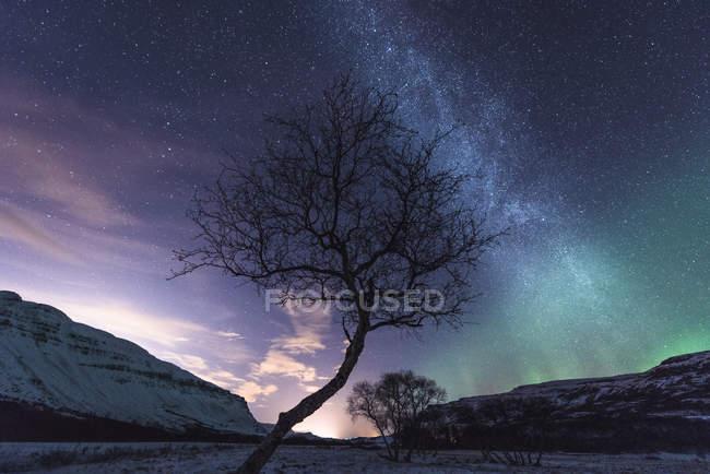Árbol con las estrellas en el cielo y aurora boreal - foto de stock