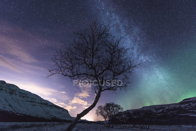 Tree with aurora borealis and stars in sky — Stock Photo