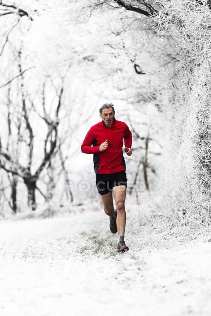 Человек, бегущий зимой по лесу, Уэнлок-Эдж, Ширшир, Англия, Великобритания — стоковое фото