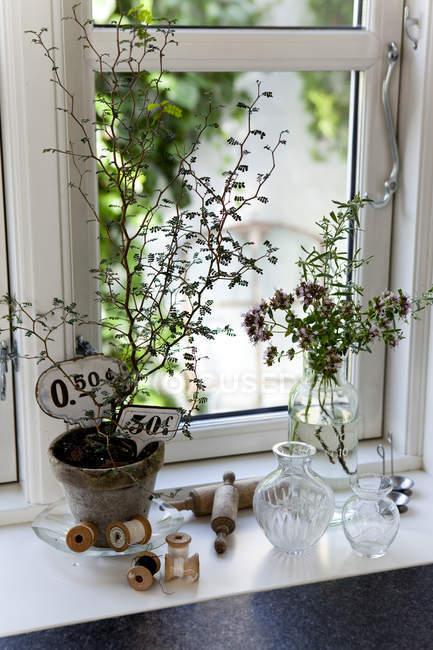 Planta de pote, vintage etiquetas y bobinas de hilo en el alféizar de la ventana - foto de stock