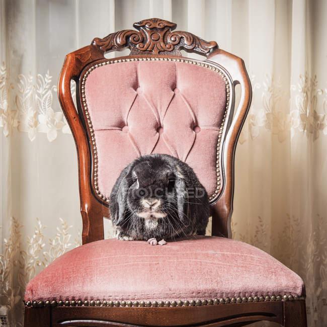 Портрет кролика сидящего на стуле — стоковое фото