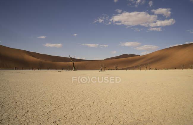 Arbres morts éloignés sur argile pan, Deaddvlei, Parc National de Sossusvlei, Namibie — Photo de stock