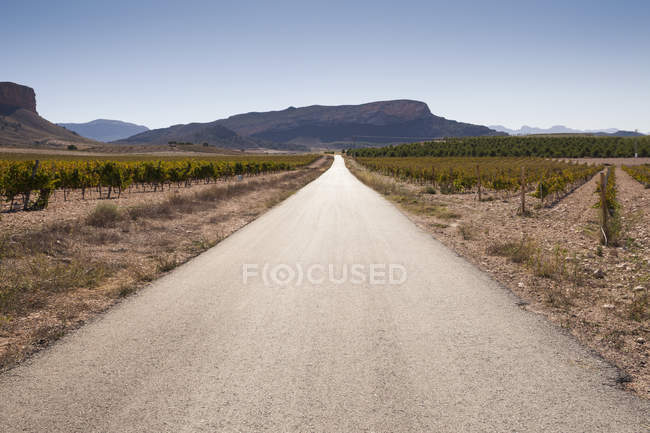 Diminishing perspective of empty road through vineyard and mountain range, Jumilla region, Spain — Stock Photo