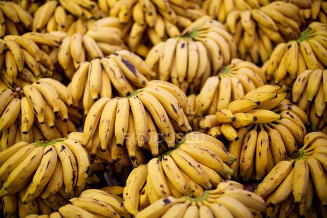Пучки жовтий стиглі банани на експорт — стокове фото