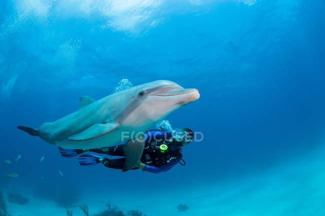 Nahaufnahme eines Tauchers mit Delfinschwimmen unter Wasser — Stockfoto