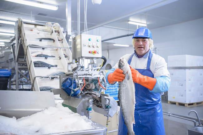 Портрет працівника в харчовому заводі Холдинг свіжого лосося поруч з технікою — стокове фото