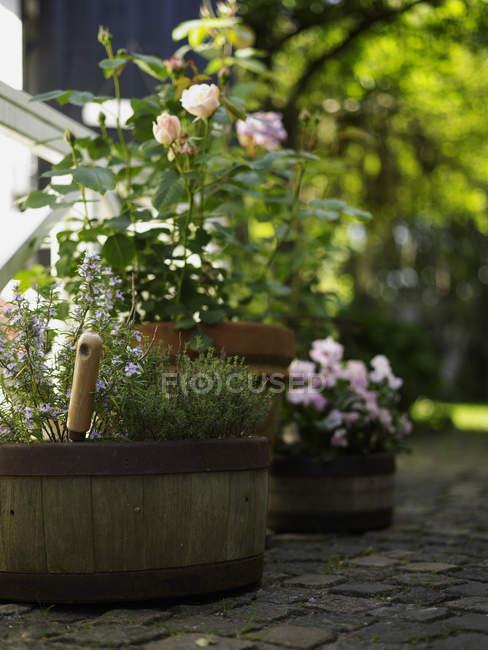 Сельский бочонок цветочные горшки и розы на террасе сада — стоковое фото