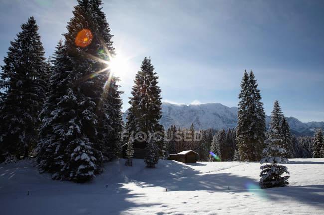 Arbres sur la colline couverte de neige au soleil — Photo de stock