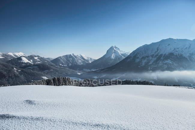 Trees on snowy mountainside — Stock Photo