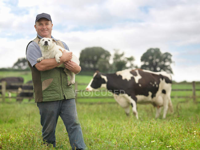 Farmer Holding Dog no campo de vacas — Fotografia de Stock