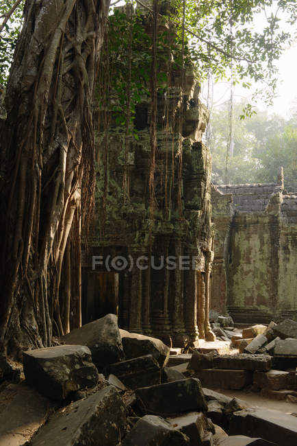 Ta Prohm temple, Angkor Wat Complex — Stock Photo