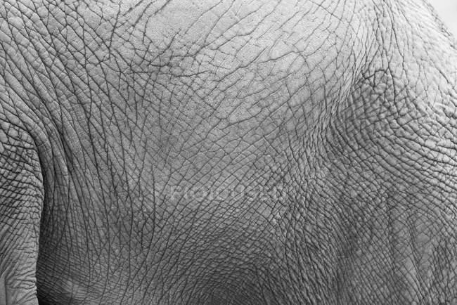Nahaufnahme der Elefantenhaut — Stockfoto