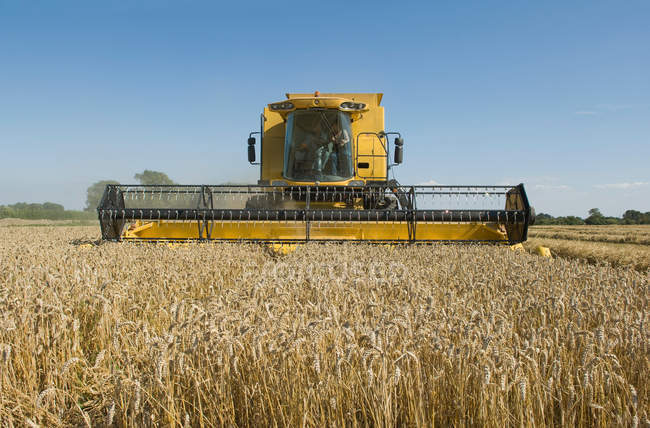 Combine harvester in wheat field — Stock Photo