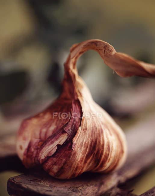 Ingrédients alimentaires, bulbe d'ail violet bio — Photo de stock